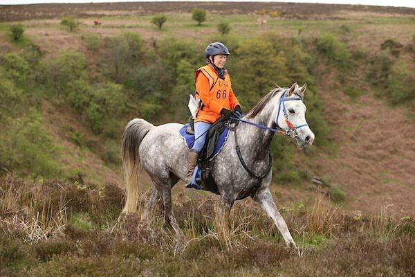 Endurance Horses and Electrolytes