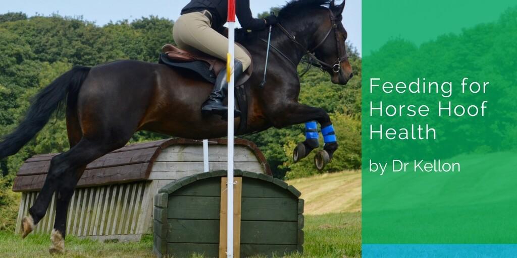 Feeding for Horse Hoof Health
