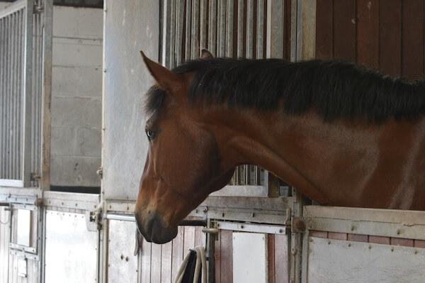 Stabled horses need omega 3 supplementation
