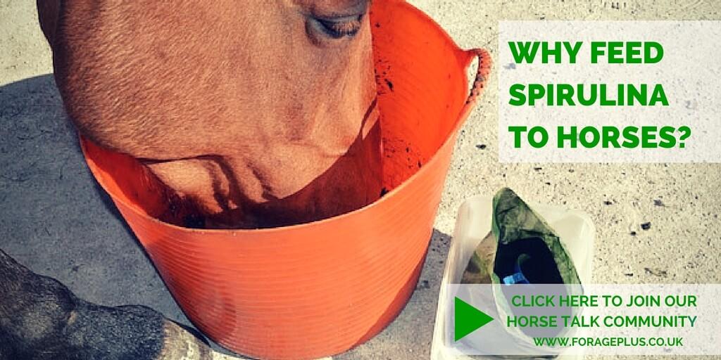 Why Feed Spirulina to Horses