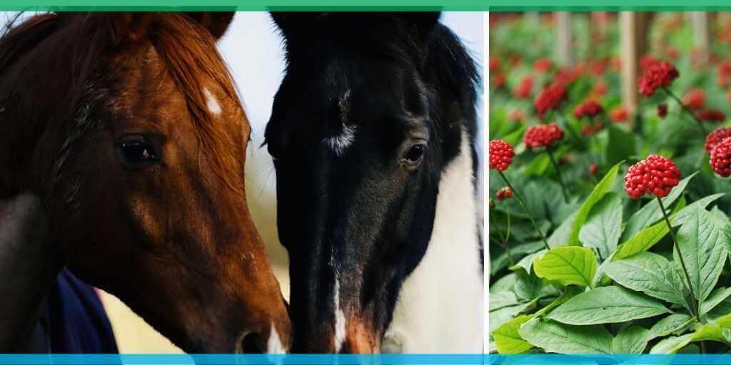 Adaptogenic herbs horse
