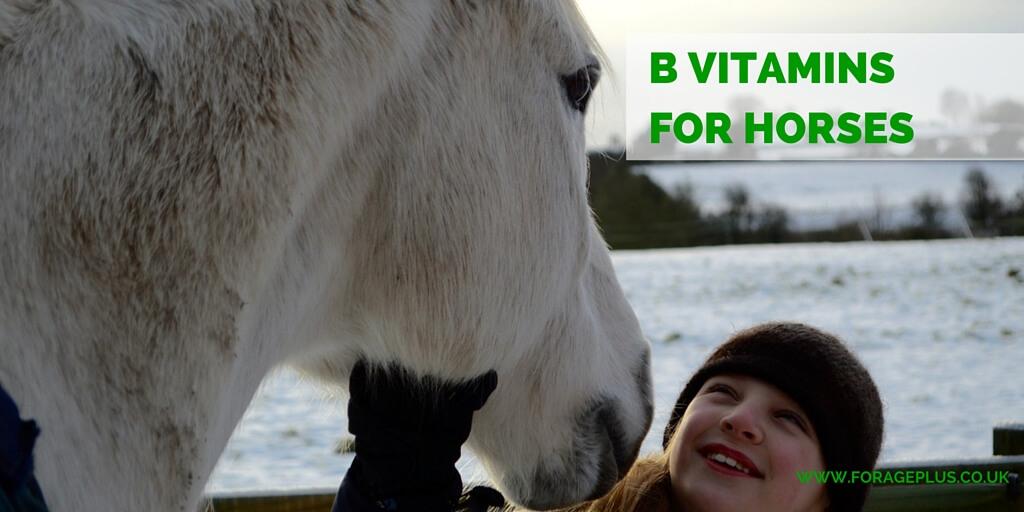 B Vitamins for Horses
