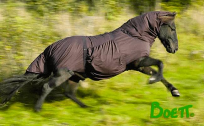 Boett Blanket helping Sweet Itch Horse