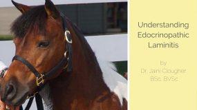 Endocrinopathic Laminitis by Dr. Jaini Clougher